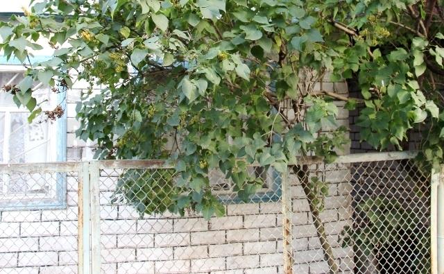 Приватизировать садовый участок набережные челны
